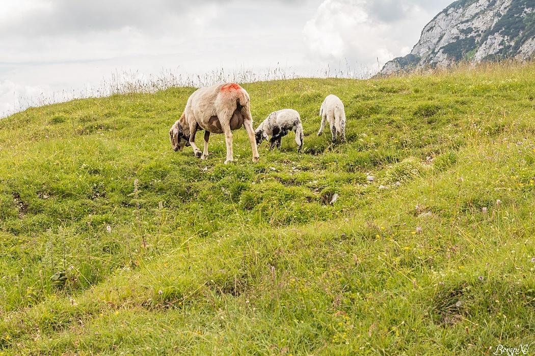 An der Reindler Alm geht´s tierisch zu
